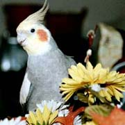 Safe and Toxic Plants for Pet Birds List, poisonous and