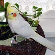 Safe and Toxic Plants for Pet Birds List, poisonous and toxic plants